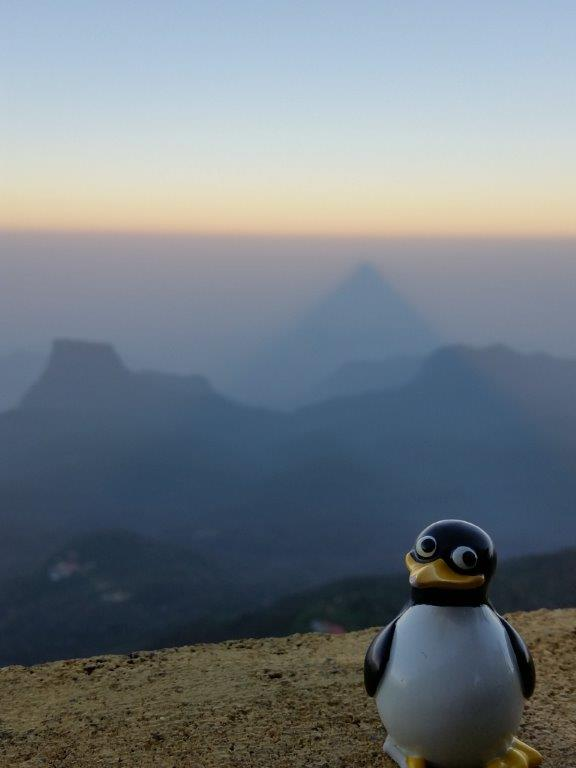 Pingu and the shadow of Adam's Peak at sunrise.