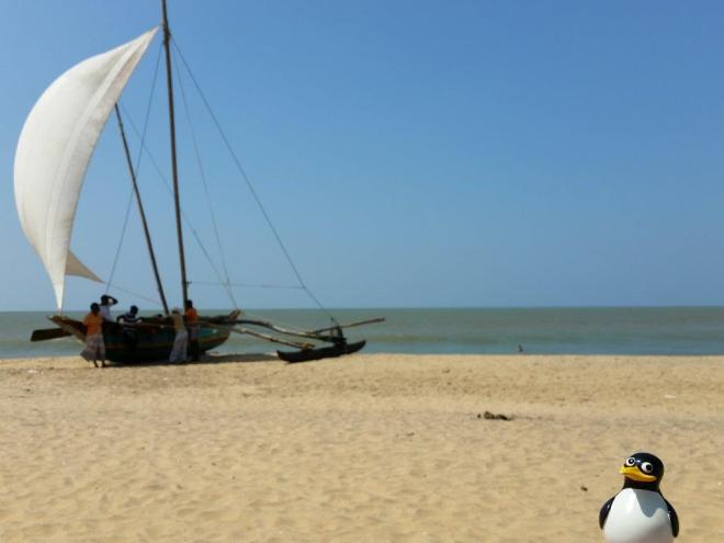 Pingu at the beach in Negombo, Sri Lanka